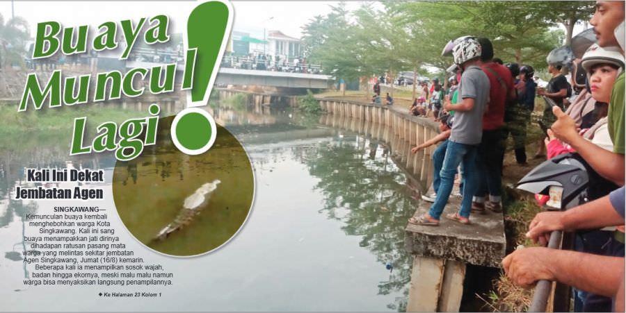 Buaya Muncul Lagi, Kali Ini Dekat Jembatan Agen Singkawang
