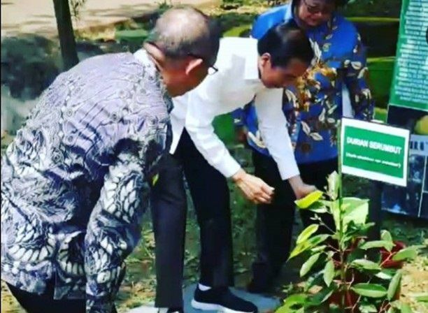 Jokowi Tanam Durian Serumbut